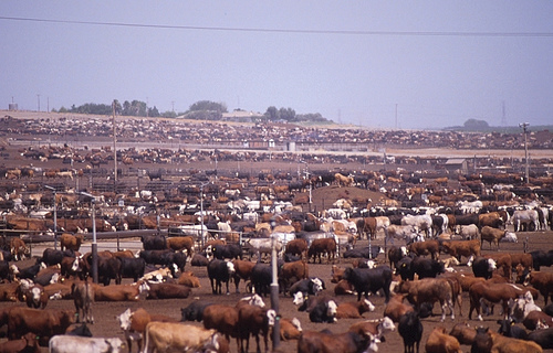 http://global-warming-truth.com/images/livestock-factory-farming.jpg